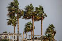palmeras movidas por el viento